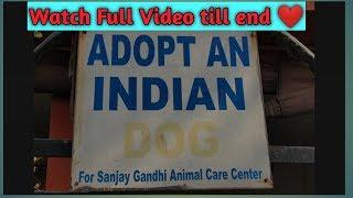 Adopt Animals from Sanjay Gandhi Animal Care Hospital | Rajouri Garden , New Delhi.