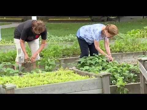 Hundreds of pounds of produce stolen