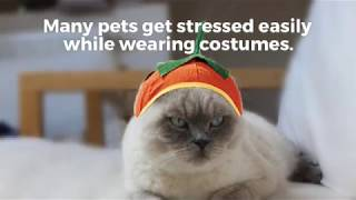Video: Pet Safety Tips for Halloween