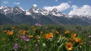 1st Day Of Summer - Grand Teton National Park