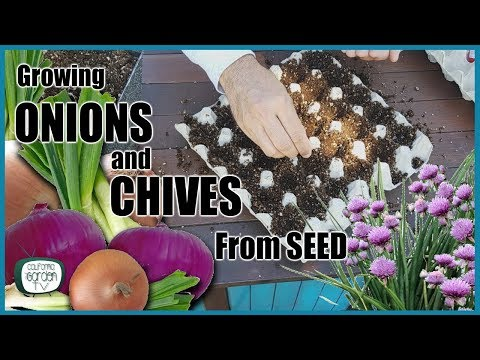 , title : 'How to Grow Onions and Chives From Seed