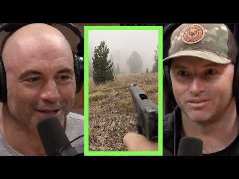 joe rogan adam greentree on dealing with bears and wolves