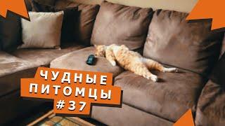 Клевые видео с животными #37 Awesome videos with animals