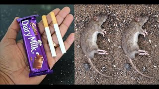 How To Kill Rats Within 30 minutes    Home Remedy  Magic Ingredient