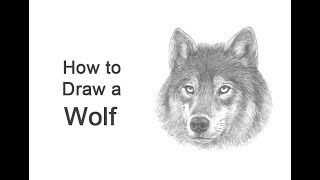 How to Draw a Wolf (Head Detail)