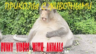 ОЧЕНЬ СМЕШНЫЕ ЖИВОТНЫЕ Угарные приколы с животными Топ 2017 funny videos with animals