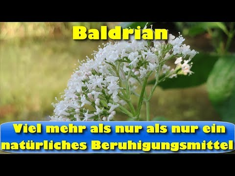Baldrian - viel mehr als nur als nur ein natürliches Beruhigungsmittel