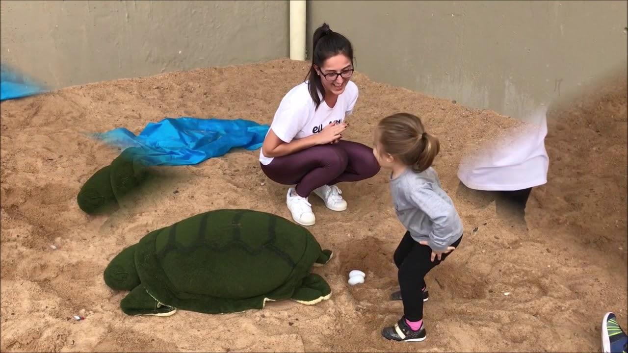 Nascimento de tartarugas marinhas é simulado em aula da Educação Infantil