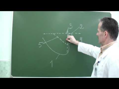 Топография области сосцевидного отростка и треугольника Шипо
