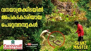 Dangerous Pythons along the forest trails | Snakemaster | Vava Suresh | EP 404