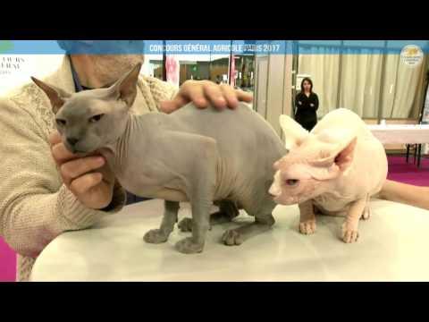 Voir la vidéo : Ring Canins du 03 mars 2017, partie 1