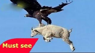 👍 ANIMAL PLANET,DOCUMENTALES DE ANIMALES   LAS AGUILAS   DOCUMENTALES,DOCUMENTAL,ANIMALES SALVAJES