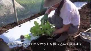 菜園だより130917−18秋野菜へ切り替え