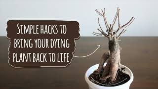 Revive Dying Plants || Simple hacks to bring your dying plant back to life || Annu Ke Nuskhe
