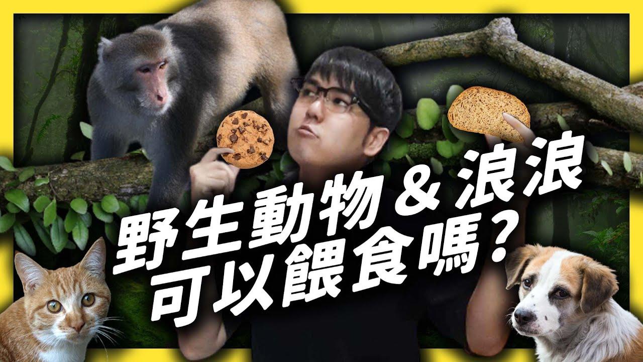 野外小動物看起來很餓很可憐,我可以餵食他們嗎?|志祺七七