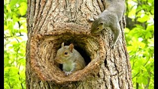 Cats Go Bonkers for this Squirrel Playing Peek A Boo Video