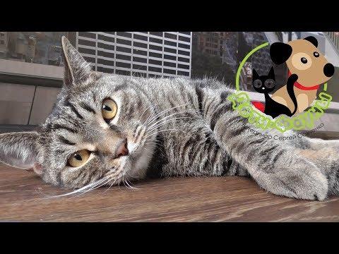 Лечение лишая у собак и кошек (важные моменты, о которых часто забывают)