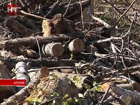 Жители Любытинского района жалуются на состояние леса