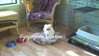 Feline Luxury Suite