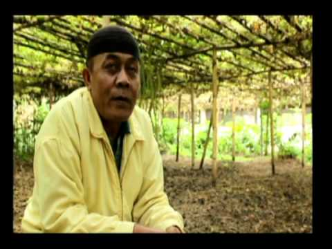 Video Feature Perkebunan Labu