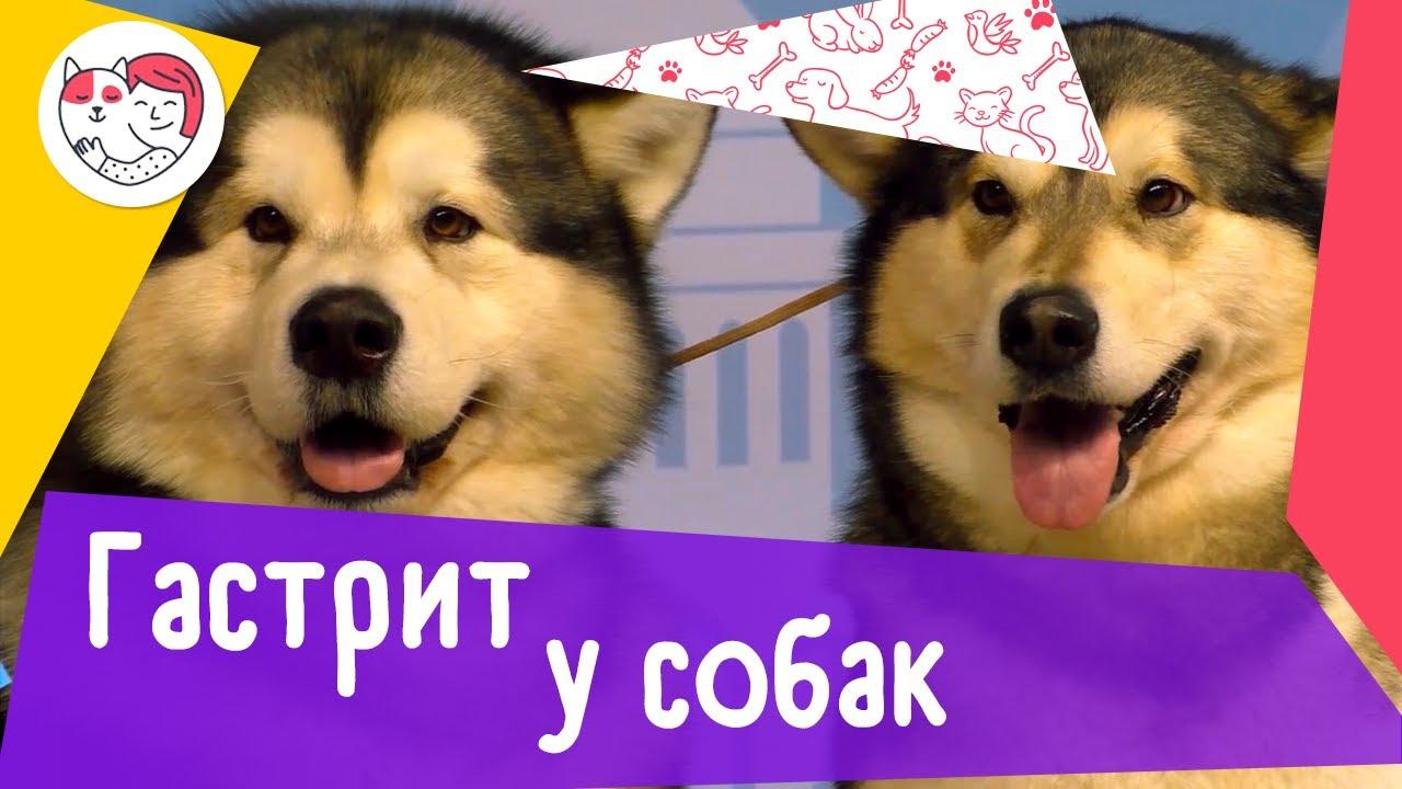 5 популярных вопросов о гастрите у собак