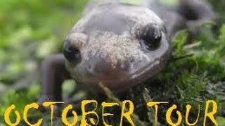 Amphibian Room Tour: October 2014