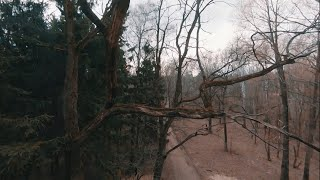 Proxy Forest | FPV