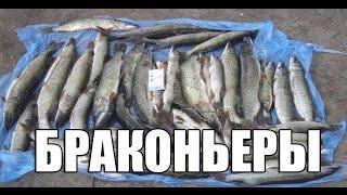 Рыбалка когда нерестится щука в сибири