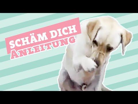 SCHÄM DICH    Hund schämen beibringen   Hund Tricks beibringen
