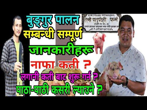 Bungur Palan सम्बन्धी सम्पूर्ण जानकारीहरू||Bungur Farm In Nepal||Pig Farming in Nepal|Pradesh Khabar
