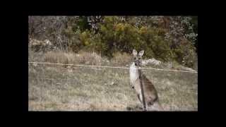 SkippyCam  The Kangaroos-  Welcome to My World- Tina Arena