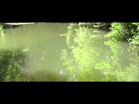 Surface Fishing for Pond Carp