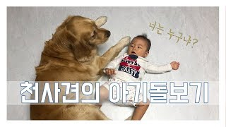 힐링영상] 아기와개/ 천사견 골든리트리버가 8개월 아기를 만났어요 :)