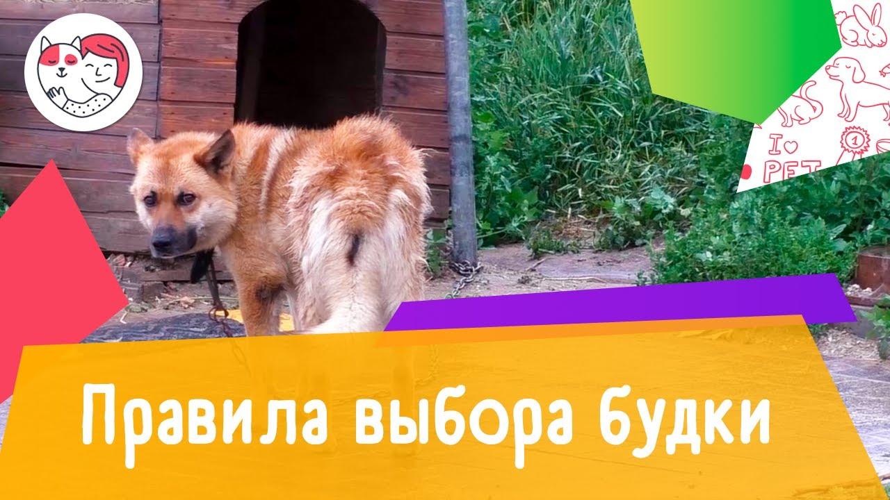 4 правила выбора будки для собаки