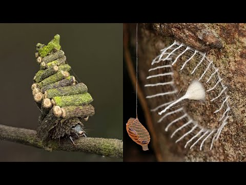 Who Knew Insects Possessed Such Amazing Craftsmanship!