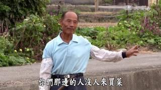 【農夫與他的田】20170127 - 回農種芋頭的同道不同路