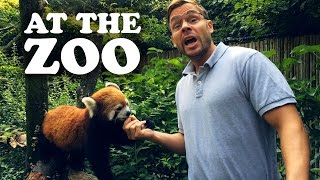 PITTSBURGH DAD AT THE ZOO