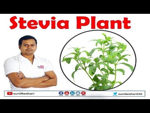 Recept iz sjemena od hipertenzije