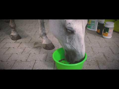 LEXA Pferdefutter präsentiert: Das LEXA Superpferd