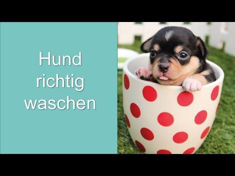 Hund richtig waschen