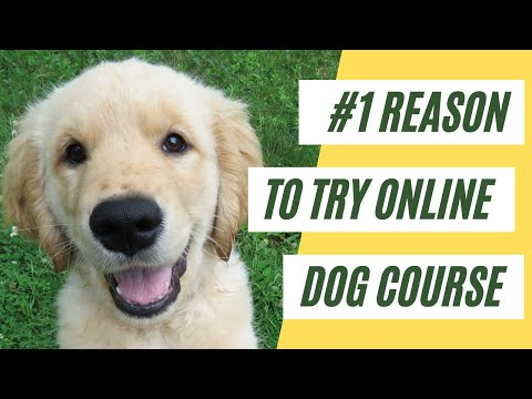 Why Dog Training Online Courses Work // Dog Focus Training ...