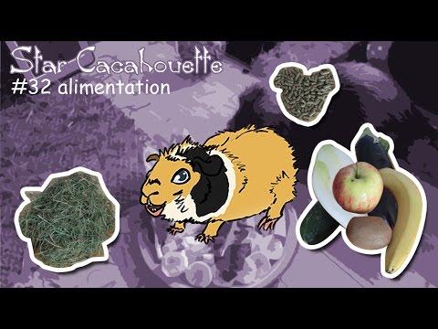 StarCacahouette #32 l'alimentation du cochon d'Inde