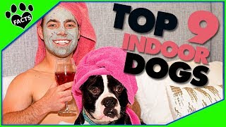 Small Dog Breeds for Indoor Pets (Apartments, Tiny Houses)