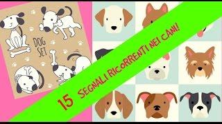 Linguaggio del cane: capire cosa vuole comunicare il cane