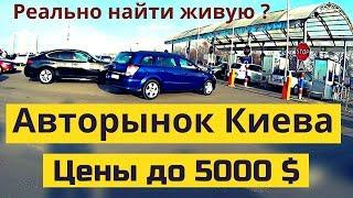 Авторынок в Киеве. Цены на АВТО до 5000 $. Январь 2020 | Автобазар