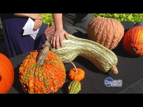 , title : 'Pumpkin Varieties