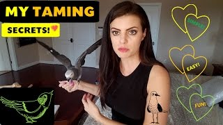 My Parrot's First Day Home, Parrot Taming Secrets | PARRONT TIP TUESDAY