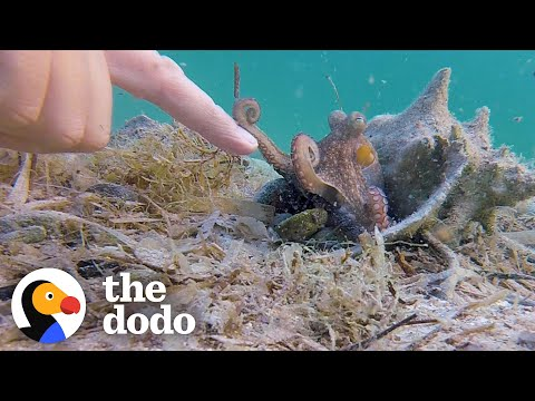 Octopus and Human - An Unlikely and Endearing Friendship