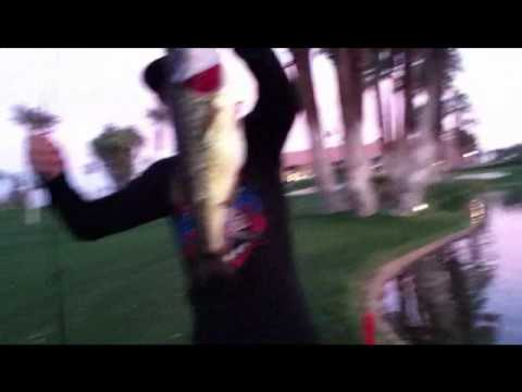 Team Socal Anglers: Pond fishing with senkos and late night buzz baits