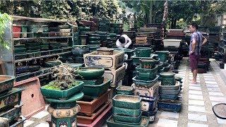 Thăm cơ sở bán chậu Bonsai đẹp, quý duy nhất ở Hà Nội (0932298288)